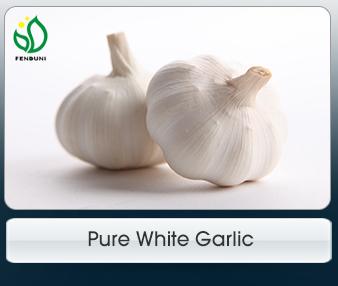 Jining Fenduni Foodstuff Co , Ltd  - Garlic
