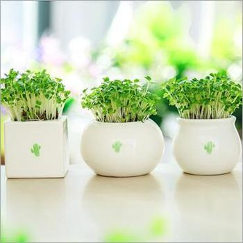 Mini creative plant grass western style cup shaped ceramic flowerpot