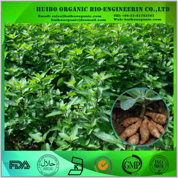 Rehmannia Glutinosa / Dried Rehmannia Root