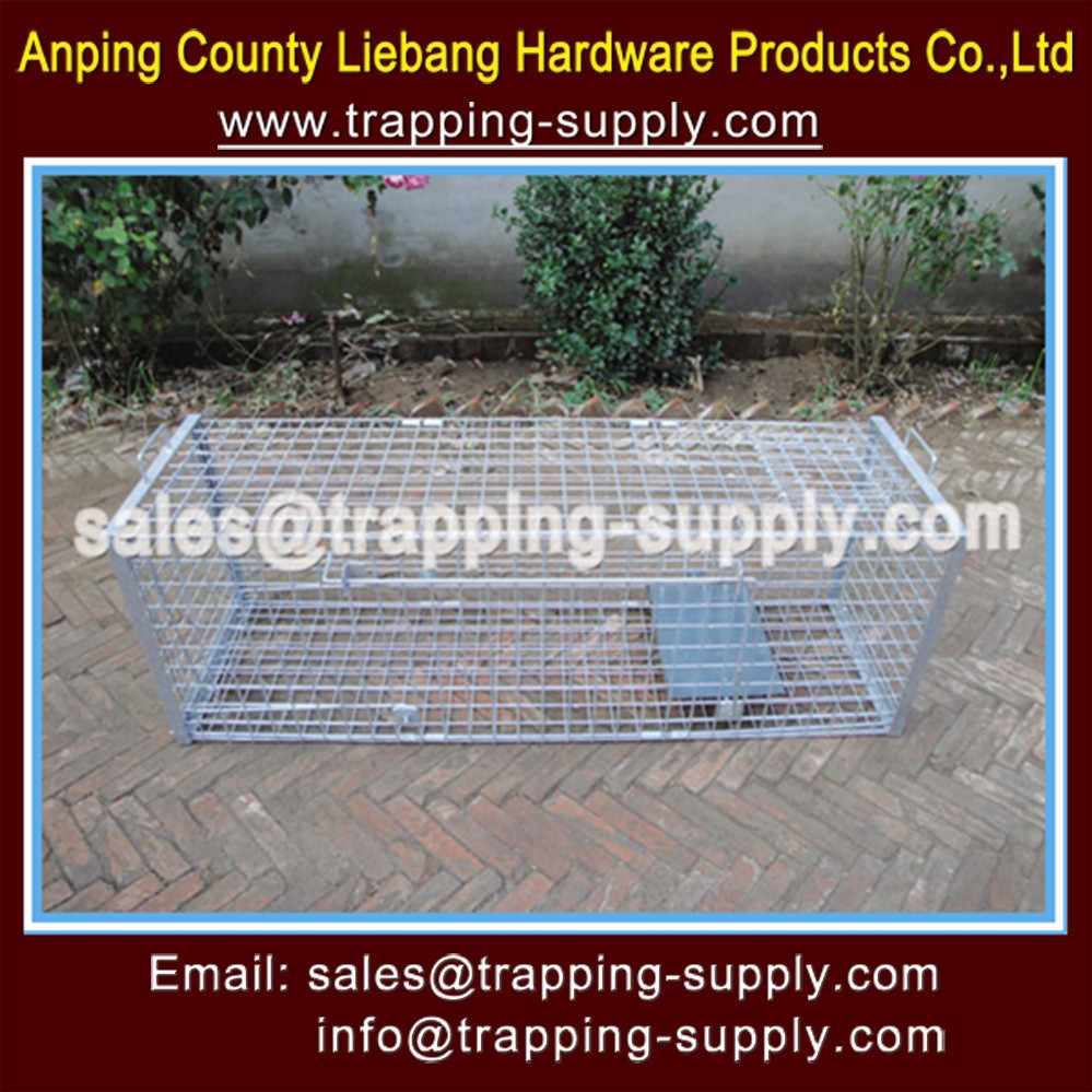 Eco-friendly Feature Coyote Trap Cage USA Market Fox Dog Snare Cage Live Capture Humane China Factory Supplier