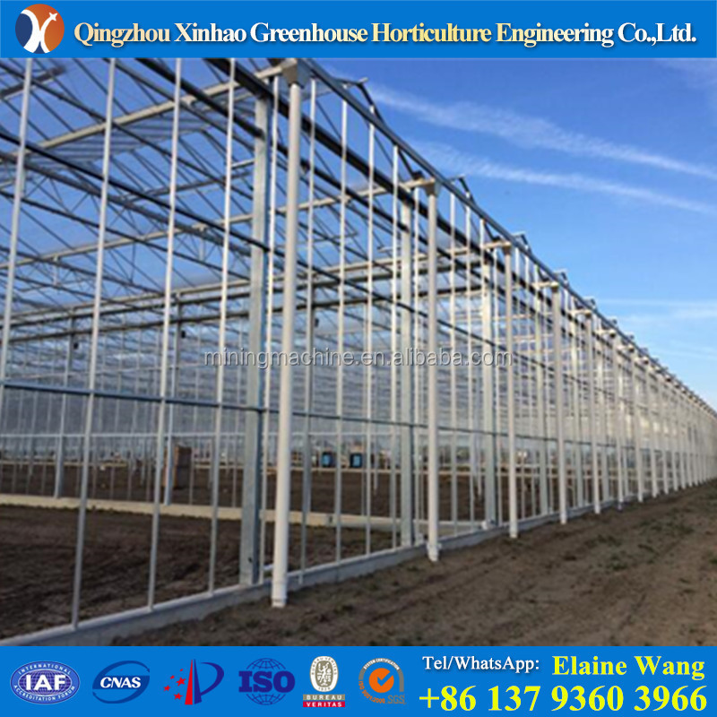 Amazing MultiSpan light deprivation galvanized pipes Agricultural PC sheet Green house for tomato