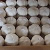 Top Quality Dried White Garlic Granules China Best Garlic Suppliers