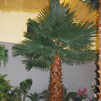 Decoration Home Indoor Lighted Washington Palm Tree Artificial Plants