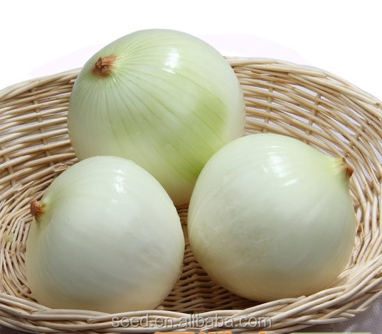 White Beauty No.1 chinese hybrid white onion seed