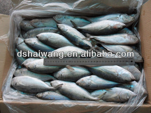 Bigeye Scad, Bigeye Scad Suppliers and Manufacturers at