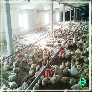 Design Poultry Farm Shed Chicken Broiler House