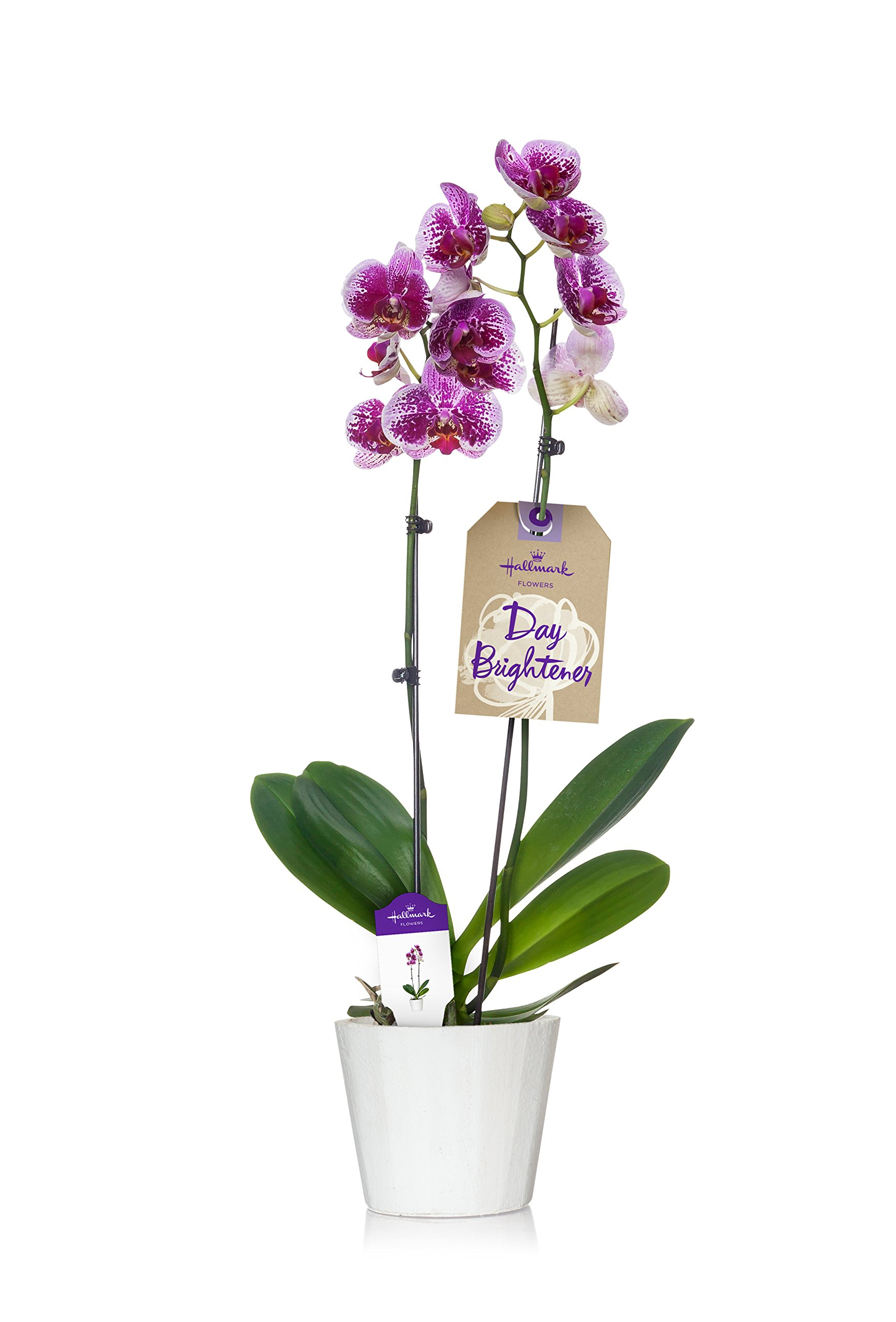 Cheap Best Container Flowers Find Best Container Flowers Deals On