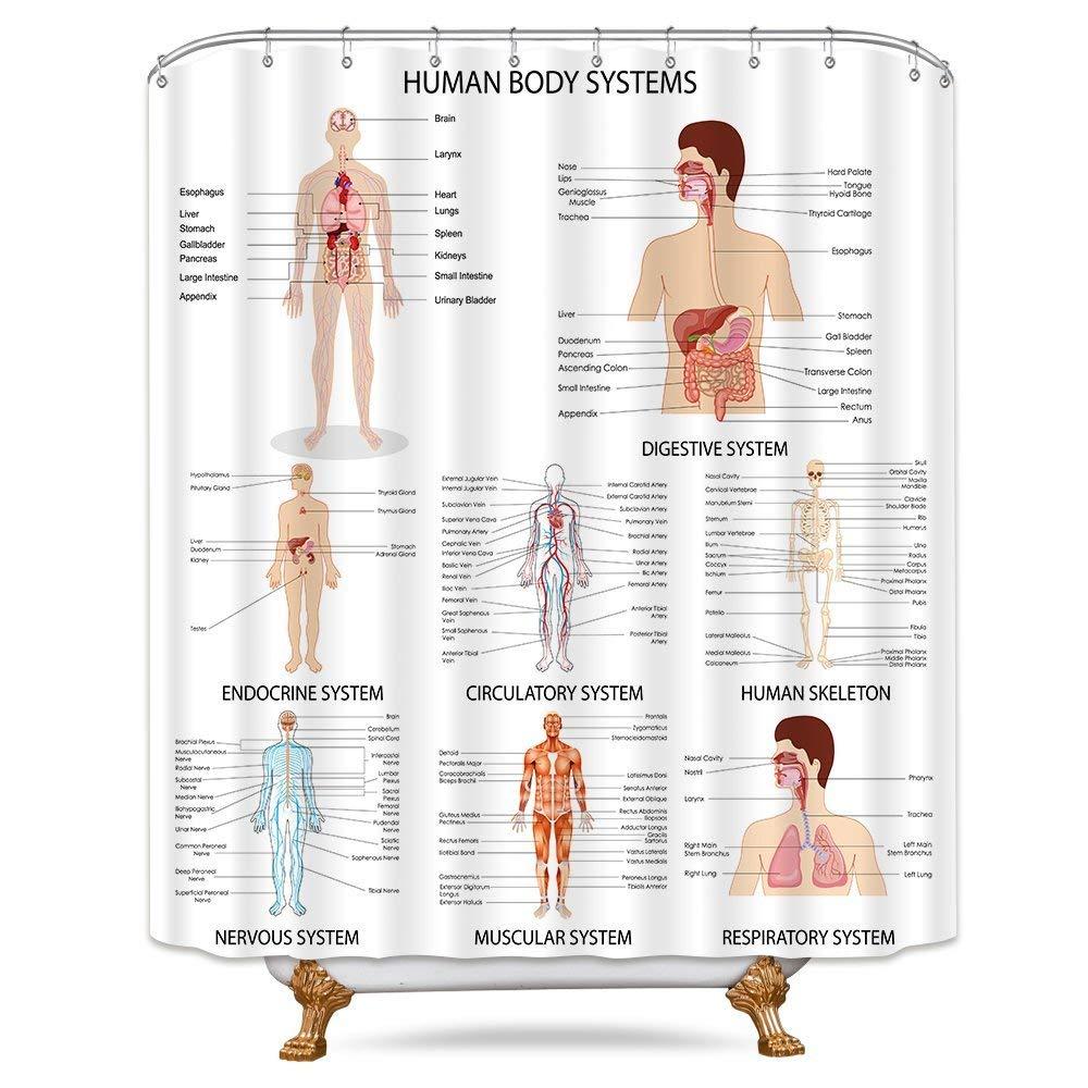 Cheap Internal Organ Anatomy Find Internal Organ Anatomy Deals On