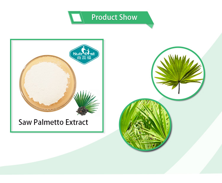 Saw Palmetto Powder Extract Saw Palmetto with Best Price
