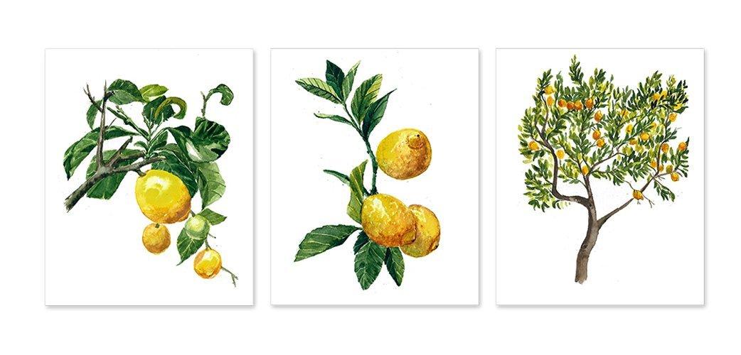 798385a18 Botanical prints wall art  A011 - Set of 3 prints(8x10 inches).