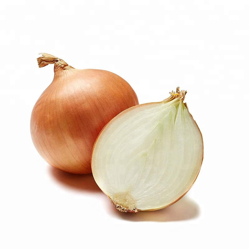 7cm Maturity 100% Common Fresh Red Yellow White Onion Importers Malaysia