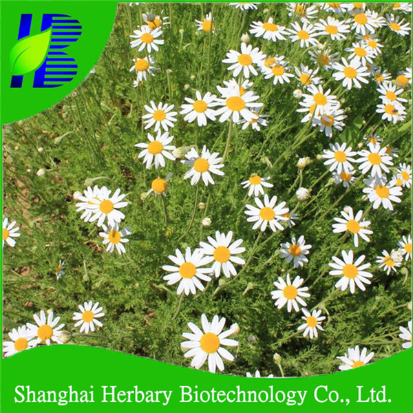 Wholesale water of Youth seeds, wild chamomile seeds made in China