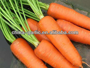 red carrot 100-200g in good quality