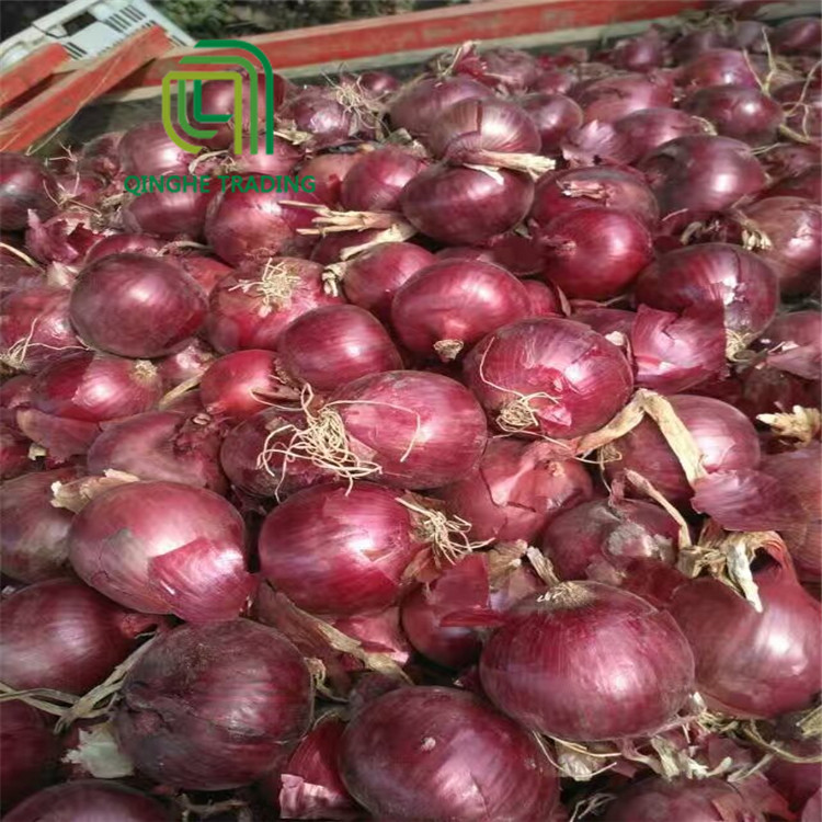 export new fresh top quality red onion with high quality
