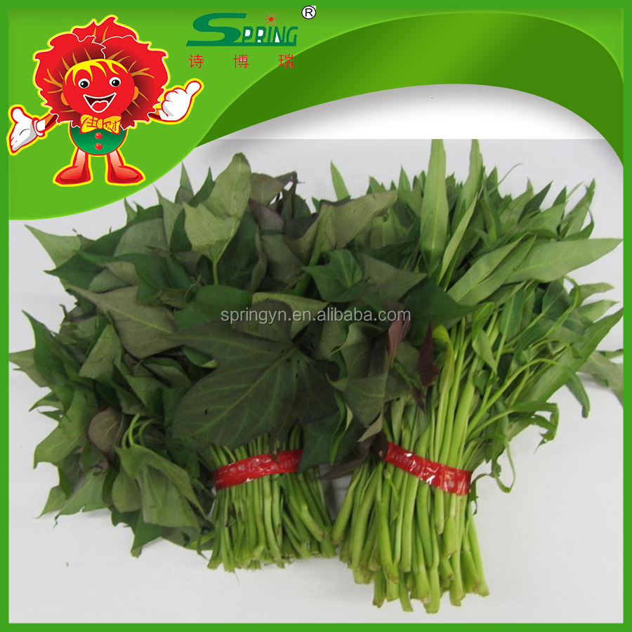 2016 green leafy vegetables fresh Sweet potato leaves