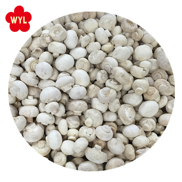 2018 Best Price IQF Frozen Champignons / White Mushroom