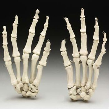 hot selling halloween skeleton hands decoration