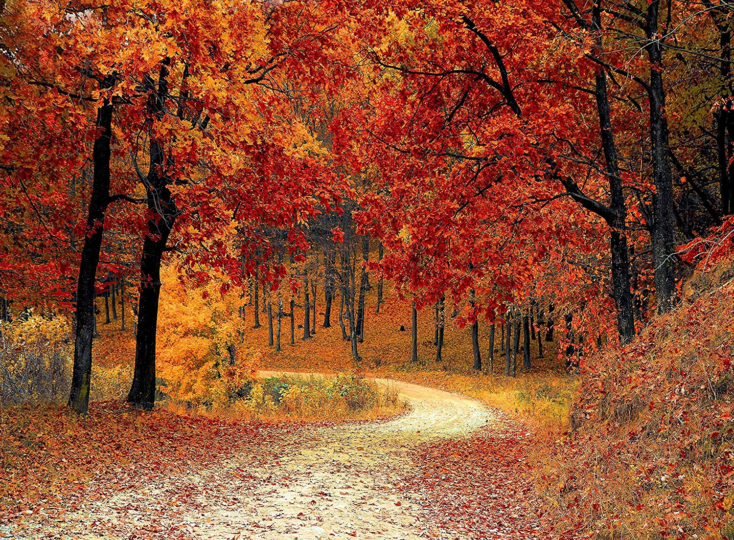 Adult Jigsaw Puzzle Red Leaf Trees Autumn Season Colors Putney London 500-Pieces