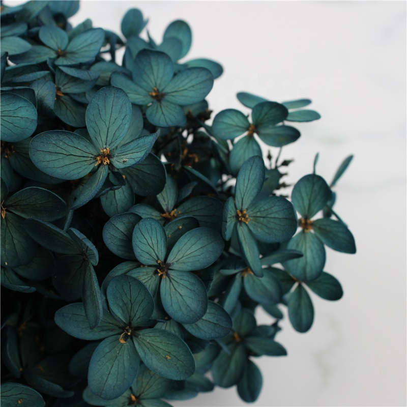 Yunnan high quality A Grade Eternal Everlasting Preserved Hydrangea real touch <strong>flower</strong> everlasting