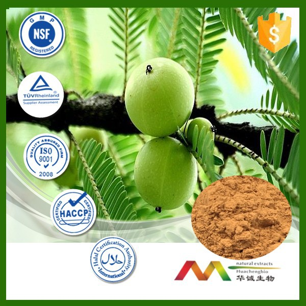 NSF-cGMP maunfacture and 100% natural amla (indian gooseberry) wholesales