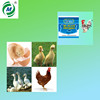High Quality Poultry Flu ND Medicine MCT-9001