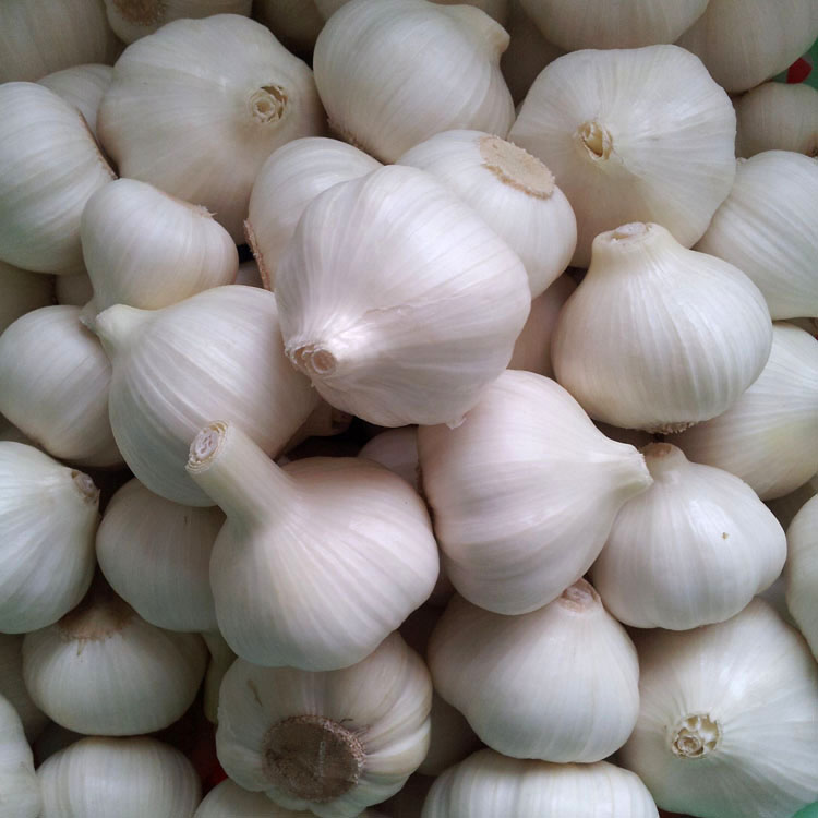 Hot Selling New Listing Fresh Garlic Price Per Ton