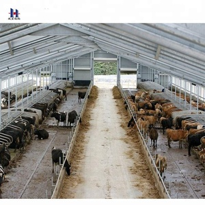 Cow or chicken poultry farm steel construction