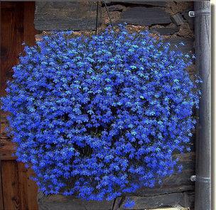 commentaires bleu graines de lin faire des achats en ligne commentaires bleu graines de lin. Black Bedroom Furniture Sets. Home Design Ideas