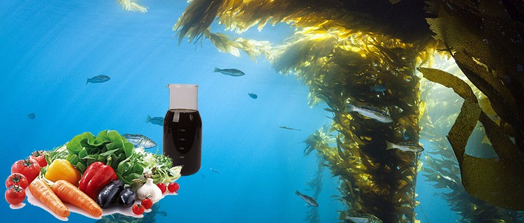 Bulk Seaweed Liquid Organic Fertilizer For Agriculture Use - Buy Bulk  Seaweed Liquid,Organic Fertilizer,Bulk Liquid Organic Fertilizer For  Agriculture