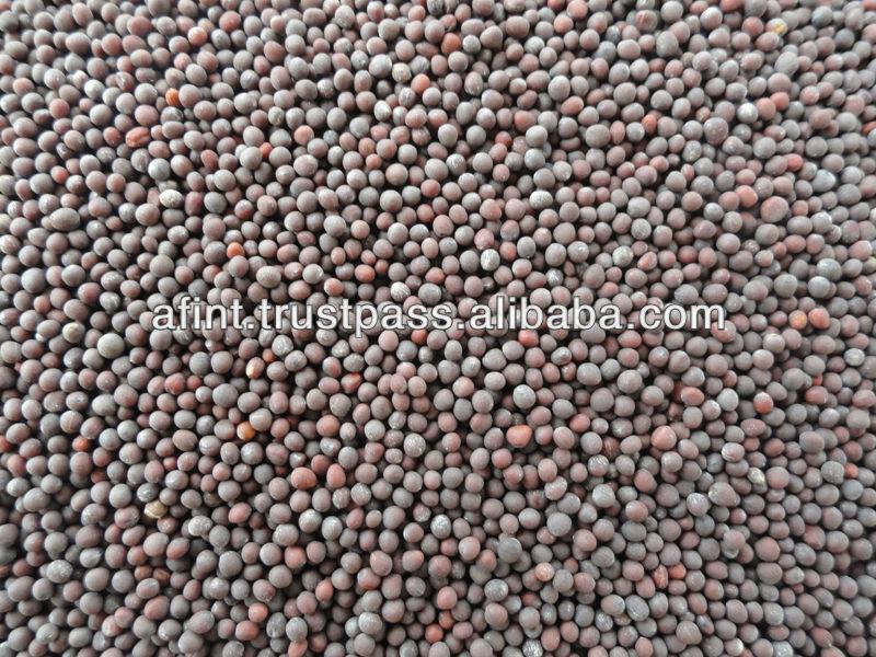Mustard Seed (rapeseed)