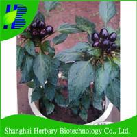 2017 Ornamental deep purple chili seeds for bonsai, bonsai seeds