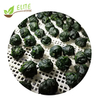 High Quality Frozen Spinach Organic IQF Spinach in Ball with good price