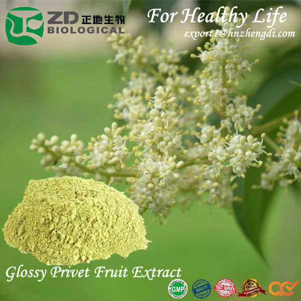 Glossy Privet Fruit Extract with High purity 30%, 95% Oleanolic acid customized specification for reducing enzymes medicine