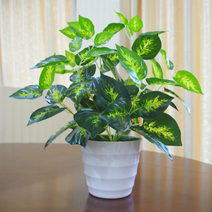 int rieur en plastique plantes promotion achetez des. Black Bedroom Furniture Sets. Home Design Ideas