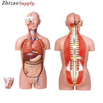 photo Bisex human organ