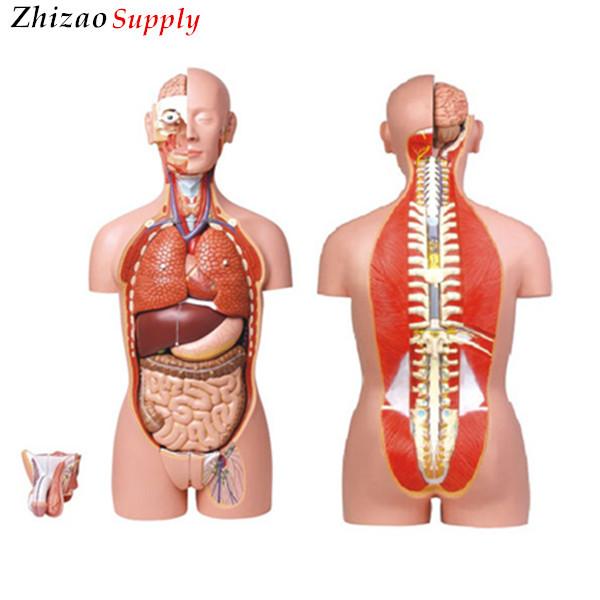 85cm Human Body Organ Model Dual Sex Anatomy Torso 27 Parts