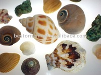 Crafts With Sea Shells