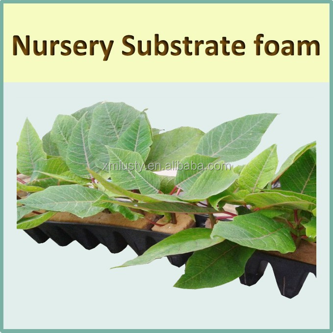 Plant Growing medium Nursery foam