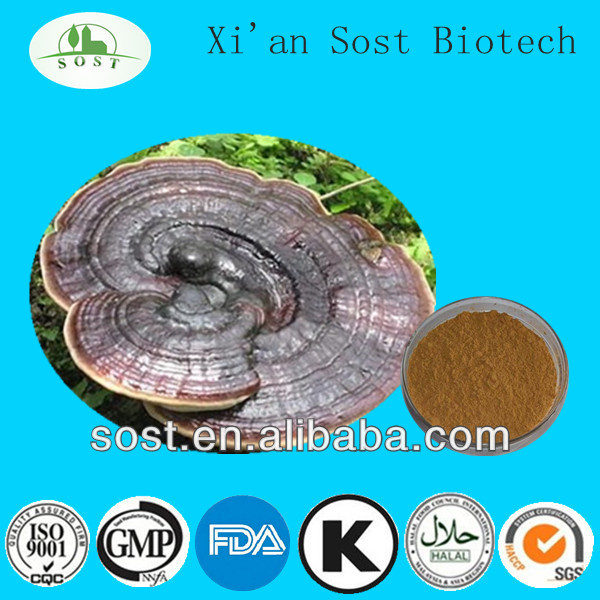 Herbal Plant Extract Powder Ganoderma Lucidum Triterpene