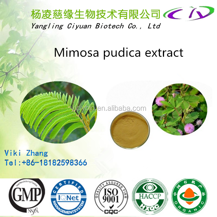 Top quality Factory Supply mimosa extract powder/10:1 mimosa pudica extract