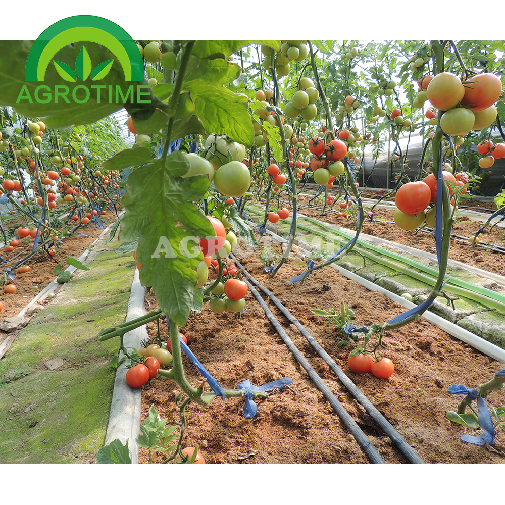 Drip Irrigation System For Horticultural Greenhouse - Buy ...