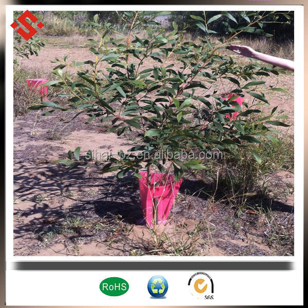 Corflute Tree Guard For Vine Plant Protection Coroplast Sheet