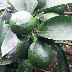 2018 Fresh Lime Seeds/Green Lemon Seeds For Sale