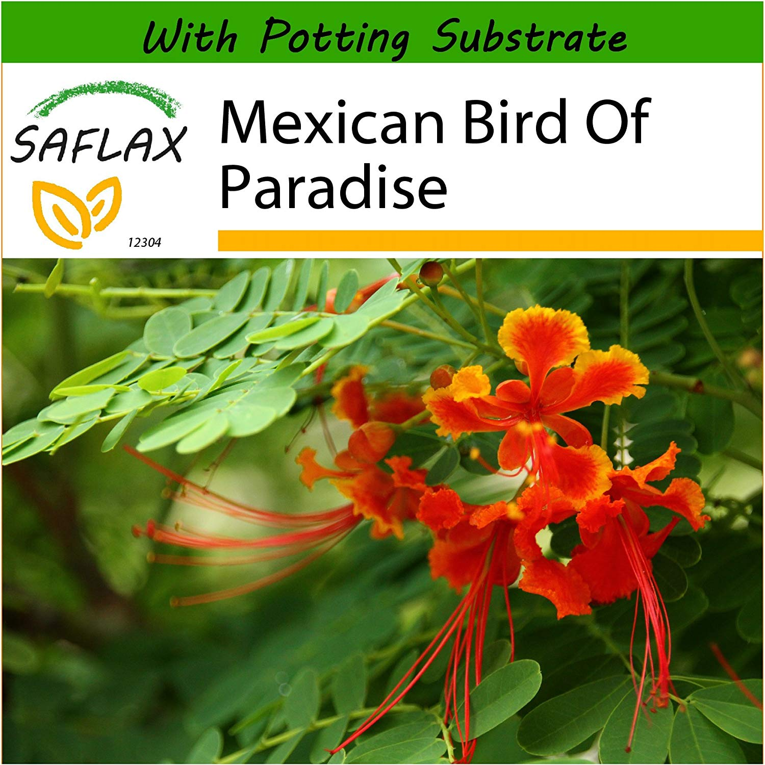 SAFLAX - Mexican Bird Of Paradise - 10 seeds - With soil - Caesalpinia pulcherrima