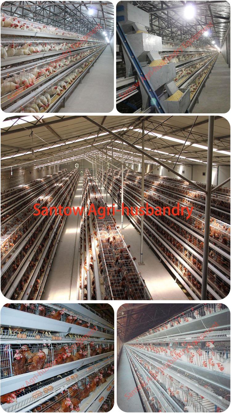 Koleksi Gambar Sketsa Kandang Ayam Batrei | Sketsabaru
