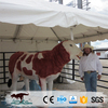 OA3391 Modern Natural Outdoor Decorative Life Size Bull Statue For Sale