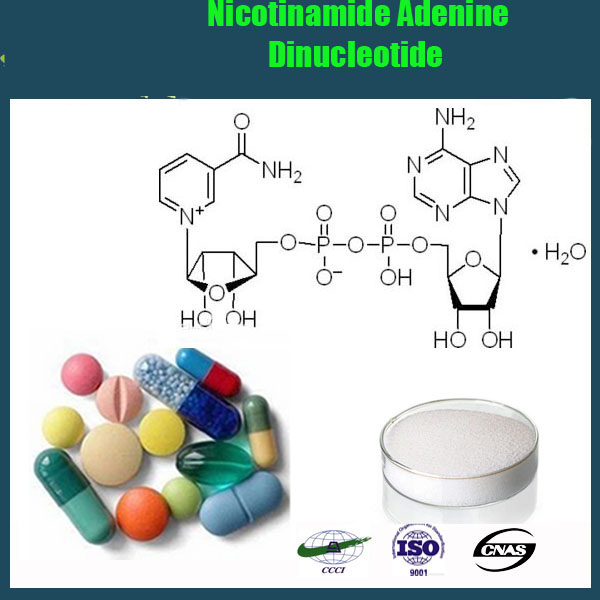 High Purity Nicotinamide adenine dinucleotide, NAD+/NADH,NADP+/NADPH/NMN