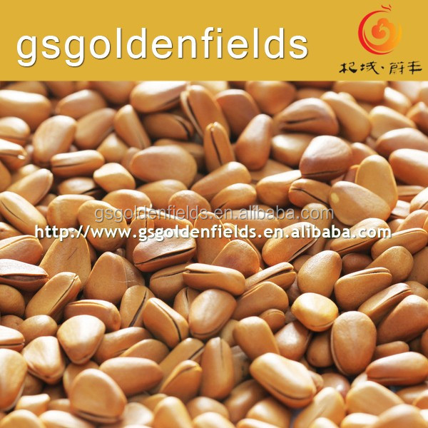 the high quality pine nuts pakistan pine nuts white pine nuts