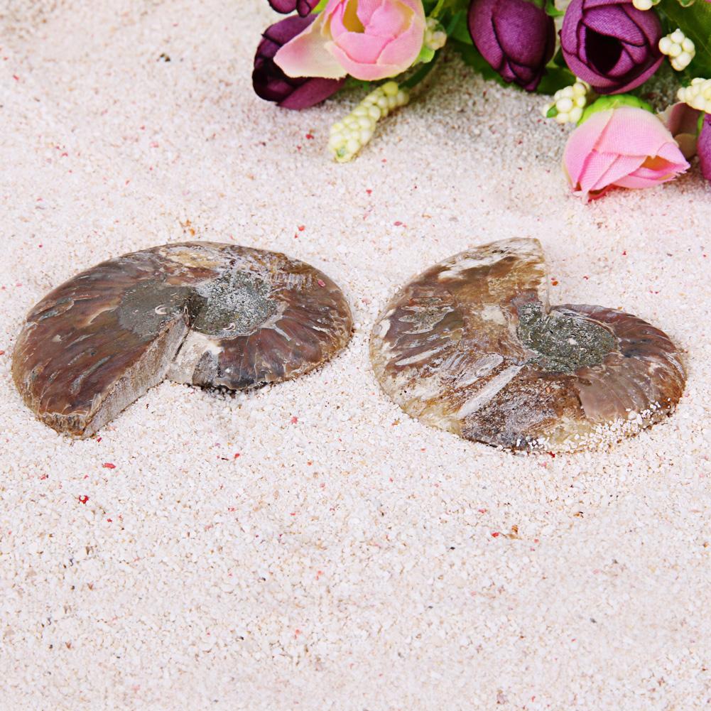 3e8b1e656532c 2pcs 40-80g Natural Conch Shell Fossil Mineral Specimen Stone DIY ...
