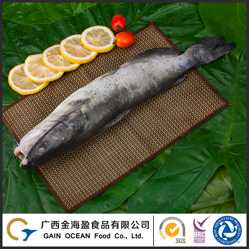 Security and no pollution low frozen fish prices frozen whole round channel catfish